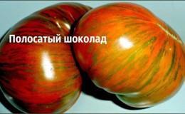 Сорт с необычным окрасом, неповторимым вкусом и аппетитным названием — томат «Полосатый шоколад»