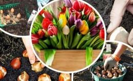 Планируем посадку сада: можно ли сажать тюльпаны весной, и когда они зацветут