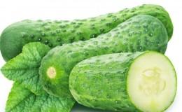 Сорт огурцов «Вязниковские» — бесподобен в свежем виде и хорош в зимних заготовках