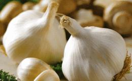 В чем заключается польза чеснока и как правильно его употреблять, чтобы не навредить здоровью