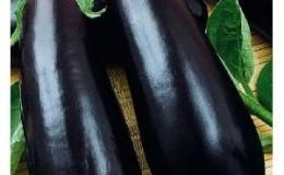 Относительно новый, но успевший полюбиться дачникам сорт баклажанов «Алмаз»