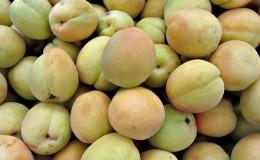 Как дозреть зеленые персики в домашних условиях