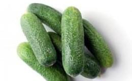 Вкусные и легкие в выращивании огурцы «Луховицкие»