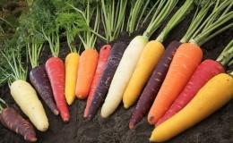 Морковь — какое это растение, сколько весит, из чего состоит — все о моркови
