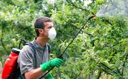 Как правильно и чем опрыскивать яблони от вредителей летом