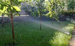 Как правильно поливать вишню летом: инструкция для садоводов-новичков