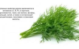 Какие витамины содержатся в укропе — химический состав и полезные свойства растения