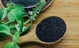 Как собрать семена базилика и что с ними делать дальше