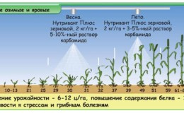 Что такое подкормка пшеницы по листу и какие удобрения можно использовать для этих целей