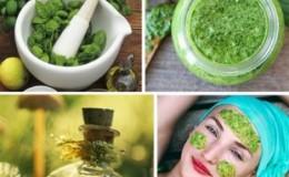 Как применять базилик для лица: отзывы, полезные свойства, рецепты масок
