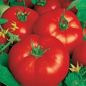 """Идеальный сорт для получения богатого, вкусного, раннего урожая помидоров: томат """"Скороспелка"""""""