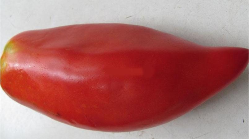 Какие низкорослые сорта томатов наиболее урожайные