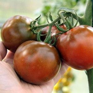 """Эффектный вид и необычный вкус: помидоры """"Кумато"""" и секреты их выращивания"""