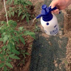 Чем подкормить помидоры во время цветения в теплице и плодоношения