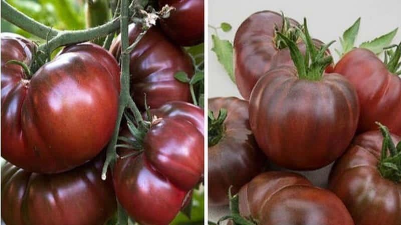 помидоры черный принц отзывы с фото противопоказания
