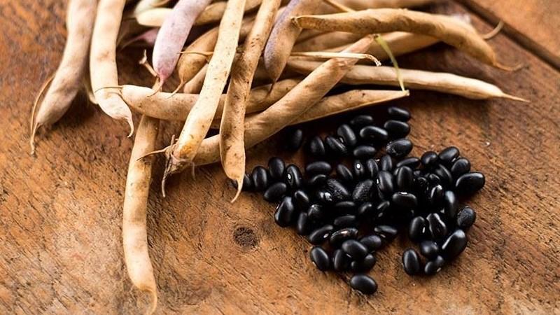Как вырастить черную фасоль на своем участке и правильно приготовить полученный урожай - лучшие рецепты