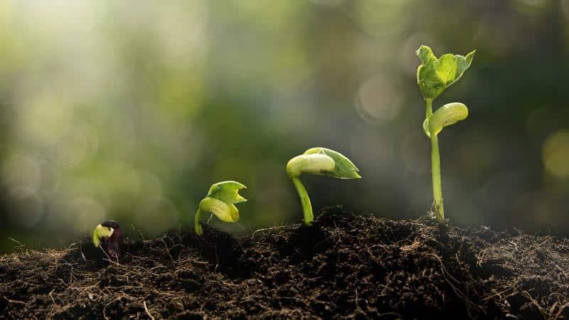 """Почему стоит выращивать на своем участке фасоль """"Красная шапочка"""" - описание сорта и его преимущества"""