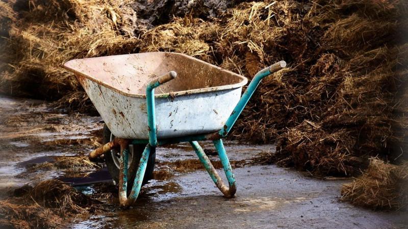 Как, когда и чем подкормить чеснок после зимы - советы опытных огородников для получения богатого урожая