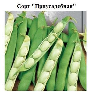 Пошаговая инструкция, как вырастить фасоль в домашних условиях и на своем участке: от посева до сбора урожая