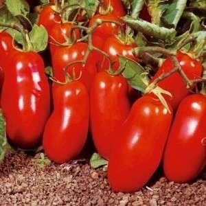 """Цветное ассорти на грядках: желтый и красный сорт томата """"Ракета"""" и практическое руководство по его выращиванию"""