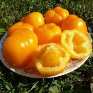 """Сочный, сладкий томат """"Медовый спас"""" с насыщенным вкусом и ярким цветом - солнечное украшение вашей грядки"""
