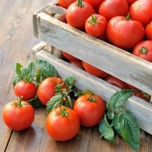 """Универсальный сорт помидоров для салатов, засолок и сушения - томат """"Метелица"""""""