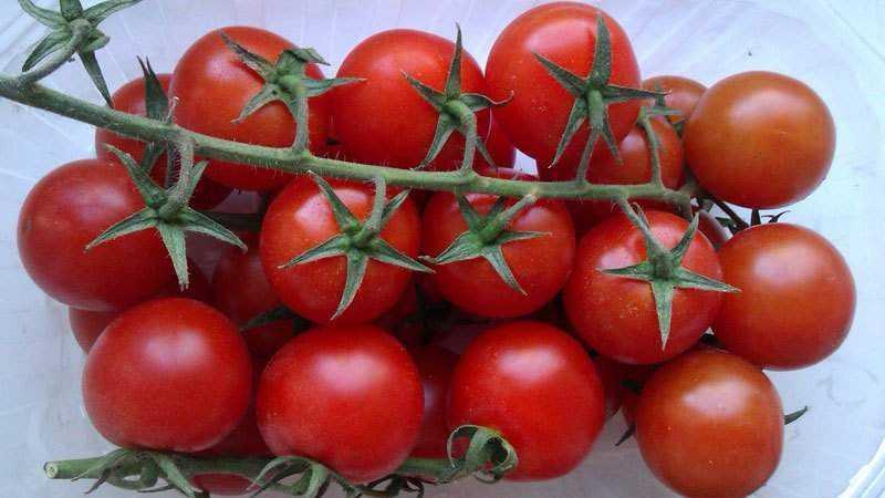 Чем полезны помидоры черри для организма?