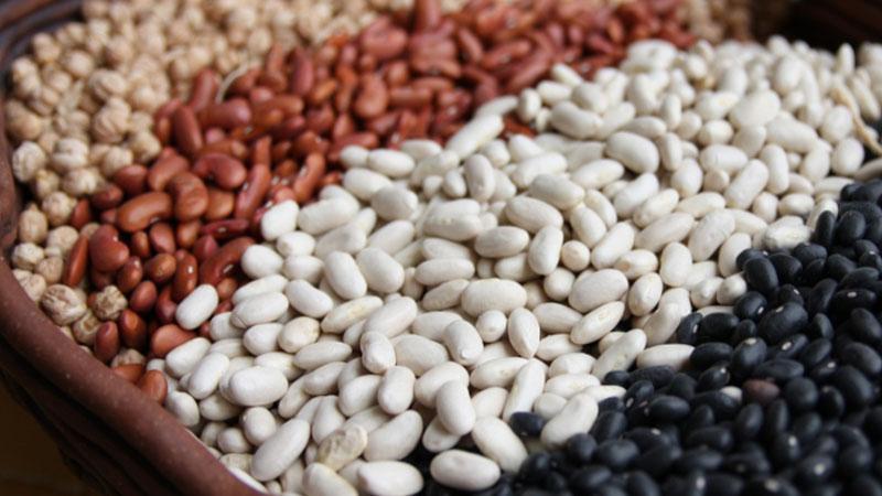 Как и когда сажать красную фасоль для лучшего урожая