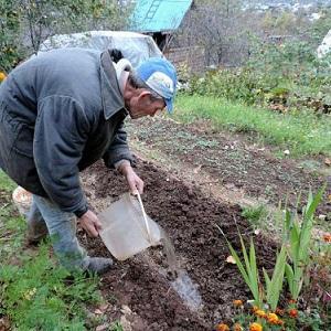 Как подготовить грядки под чеснок под зиму: пошаговая инструкция для начинающих фермеров и советы опытных коллег