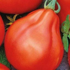 """Растим богатый урожай сладких и сочных помидоров: томат """"Трюфель красный"""" - характеристика и описание сорта"""