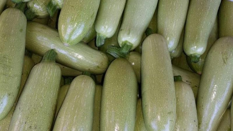 Сберегаем урожай до весны: как хранить кабачки на зиму правильно и какие условия необходимо создать для овощей