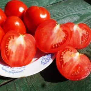 """Один из самых сладких тепличных сортов - томат """"Александр Великий"""""""
