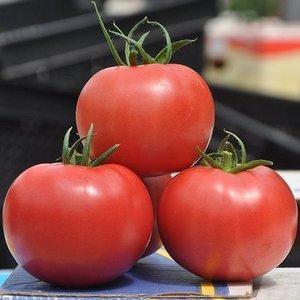 """Инструкция по выращиванию томата """"Малиновый звон"""": наслаждаемся красивыми крупными плодами"""
