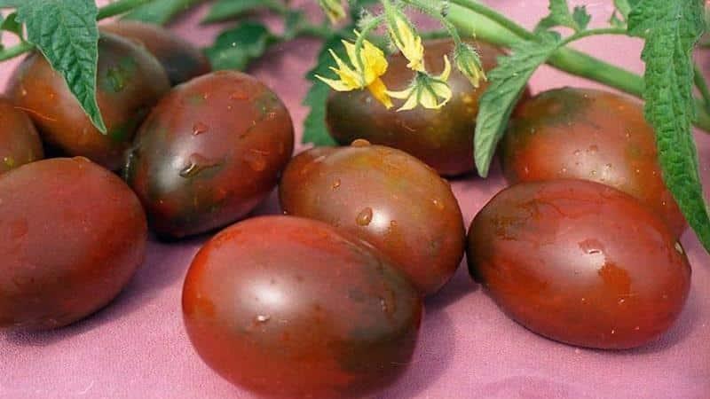 """Секреты успешного выращивания томата """"Черный мавр"""""""