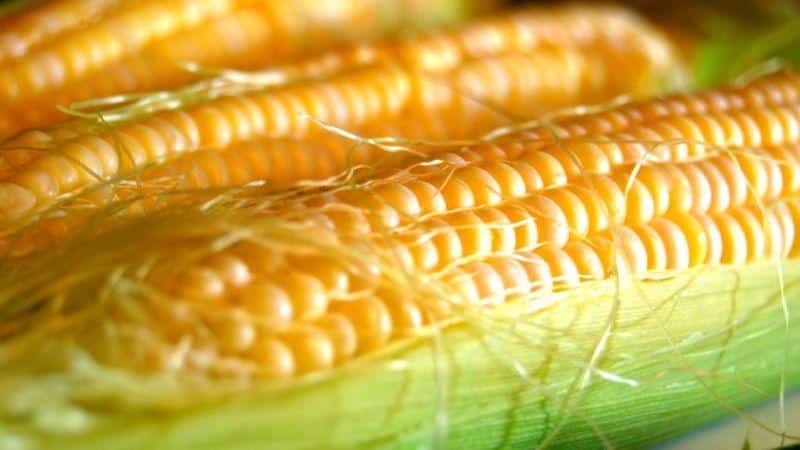 Что такое кукуруза - это фрукт, злак или овощ: разбираемся в вопросе и подробнее изучаем царицу полей