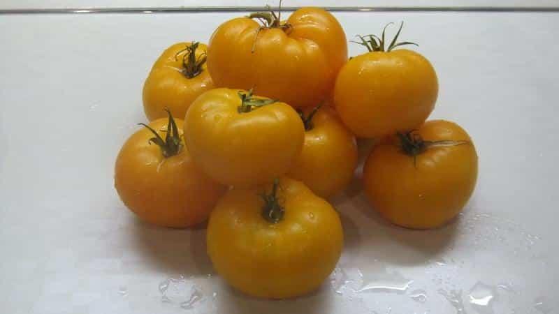 Лучшие сорта желтых помидоров для теплицы: знакомимся с самыми яркими представителями и выбираем вид правильно