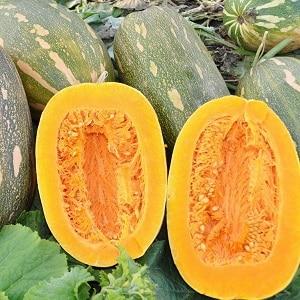 """Один из самых популярных сортов тыквы """"Витаминная"""": как получить богатый урожай полезного и вкусного овоща"""