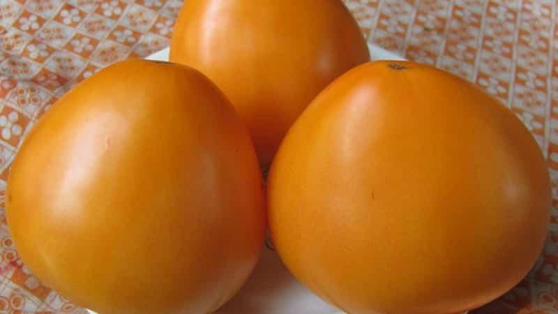 """Устойчивые помидоры с высокой урожайностью для теплицы и грунта - томат """"Золотые купола"""""""
