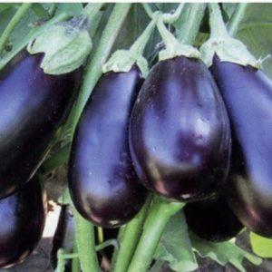 """Обзор сорта баклажанов """"Щелкунчик"""": преимущества и недостатки, нюансы выращивания"""