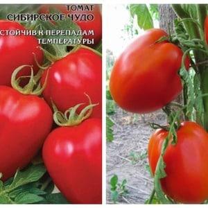 """Универсальный, урожайный, скороспелый и так горячо любимый дачниками томат """"Сибирское чудо"""""""