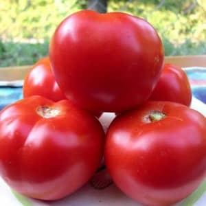 """Высокая урожайность при минимальных затратах - томат """"Спасская башня f1"""": отзывы огородников и секреты выращивания"""