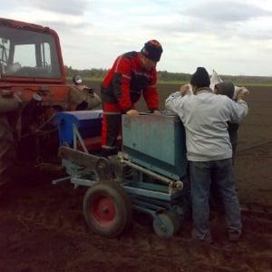 От чего зависит урожайность чеснока и как её повысить: советы опытных фермеров и нюансы выращивания