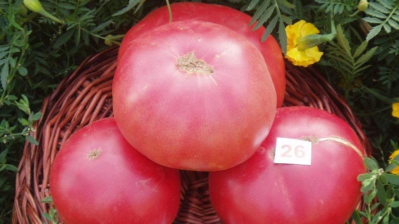 """Выращиваем от посева до сбора урожая томат """"Розовое чудо F1"""": отзывы фермеров и практические рекомендации"""