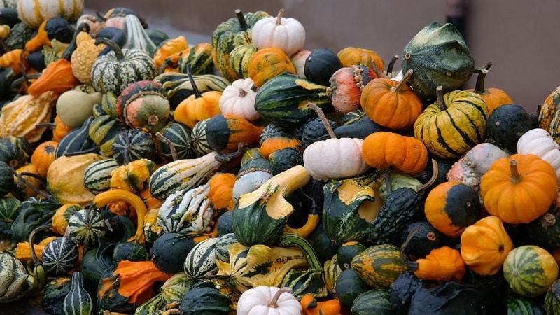 Как выглядит декоративная тыква: выращиваем необычные плоды и создаем произведения искусства