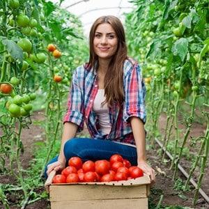 """Неприхотливый, но очень вкусный сорт томатов """"Чудо рынка"""" с богатым урожаем - любимец опытных огородников"""