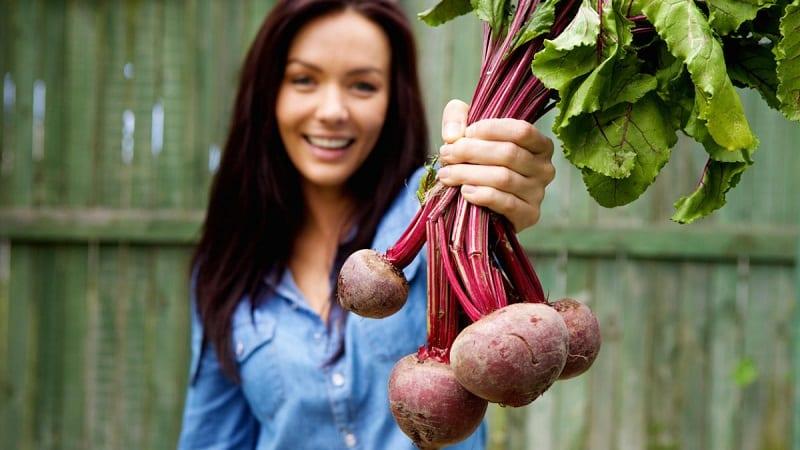 Полезные свойства свеклы для женщин: как применять овощ с максимальной пользой для красоты и здоровья