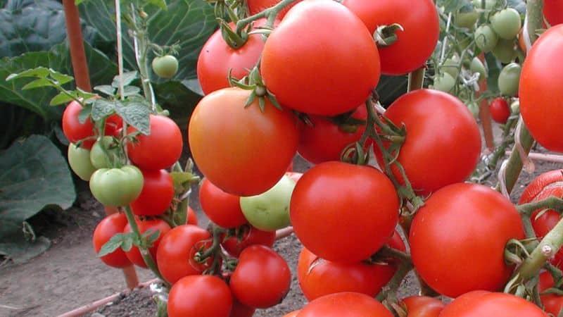 Польза Томатов Для Похудения. Полезны ли помидоры для похудения?