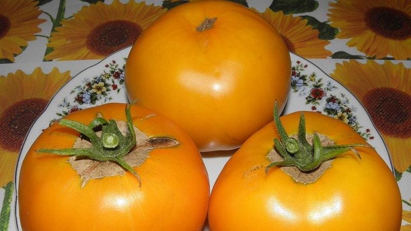 """Яркий и экзотичный гость на грядке: томат """"Апельсин"""""""