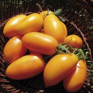 """Универсальные в использовании и легкие в уходе миниатюрные томаты """"Медовые пальчики"""": выращиваем с умом"""