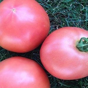 """Сладкие, крупные и очень ароматные томаты """"Пандароза"""" - украшение грядки"""